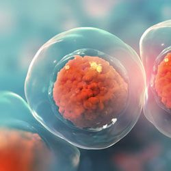 Stem Cell Therapy Seattle